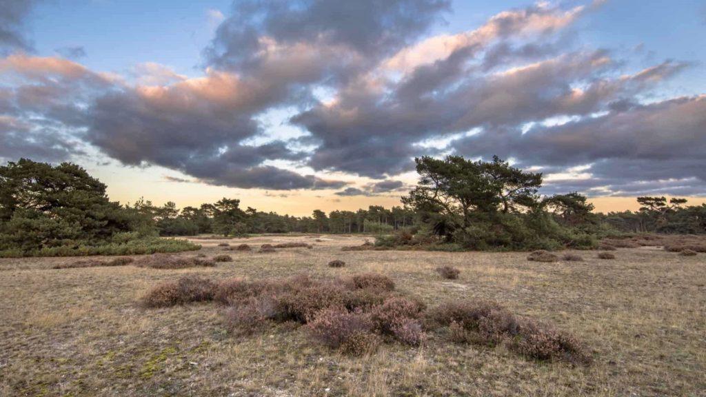 Dia 6 van 34: Door een economische crisis was Anton in 1935 genoodzaakt zijnVeluwse bezittingen te verkopen aan een nieuw opgerichte stichting: Stichting Het Nationale Park De Hoge Veluwe.